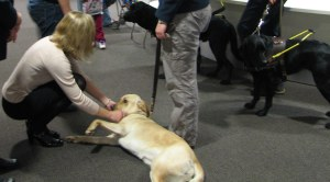 Visiting guide dogs