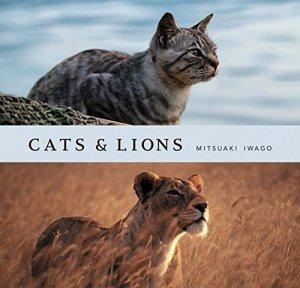 Cats & Lions