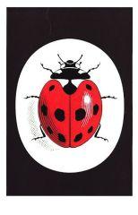 Ladybird books logo