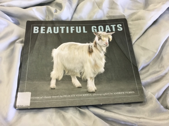Beautiful Goats cover.docx