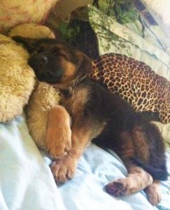 Mekah as a puppy