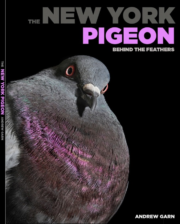 New York Pigeon 2